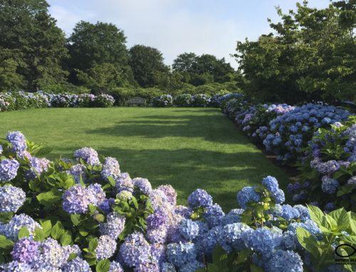 Garden & Planting, and Hardscape Design: Newport, Rhode Island