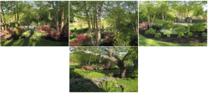 tiverton garden design
